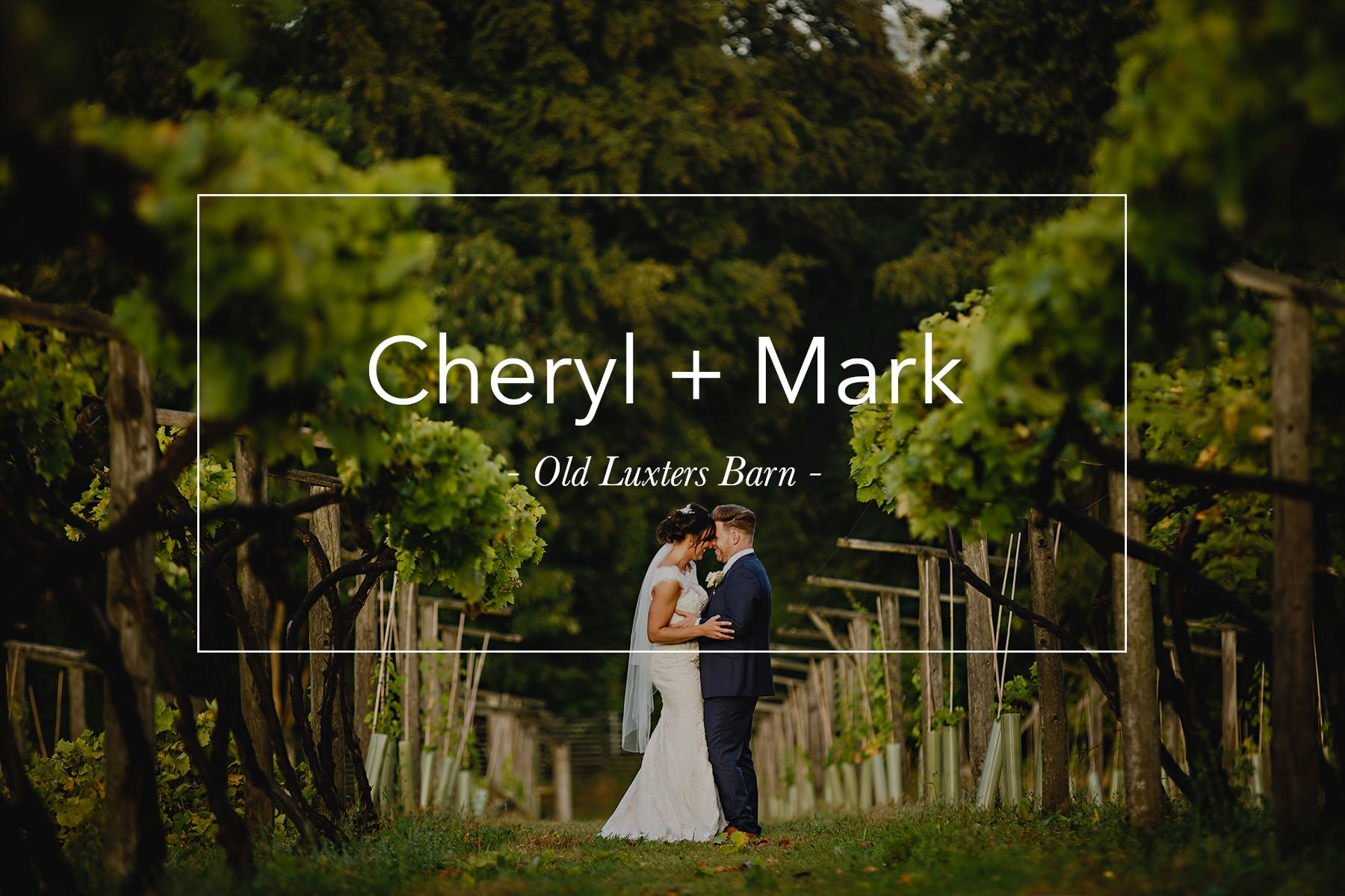 The bride and groom stood together in the vineyard at Old Luxters Barn