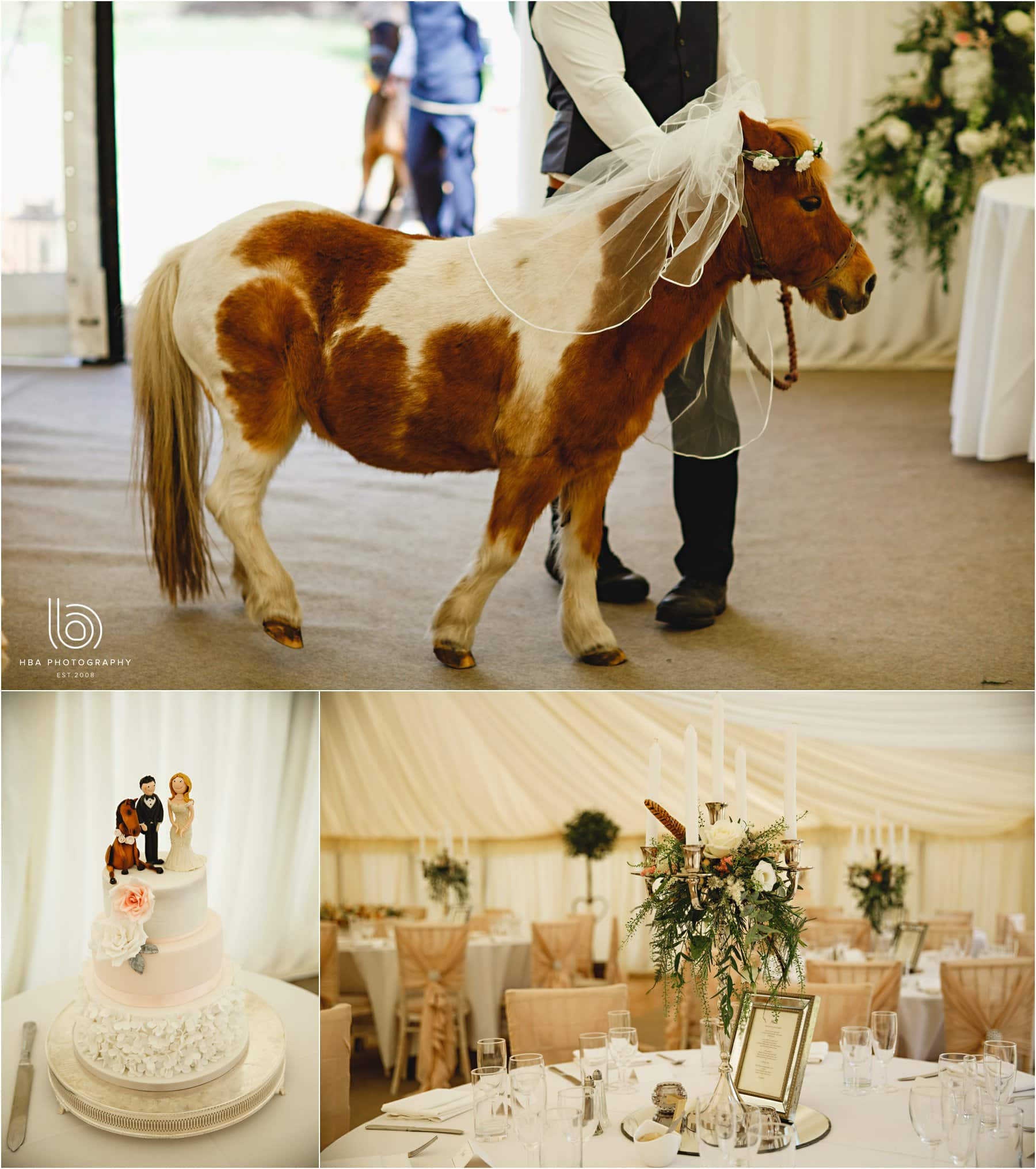 a shetland pony dressed as a bride