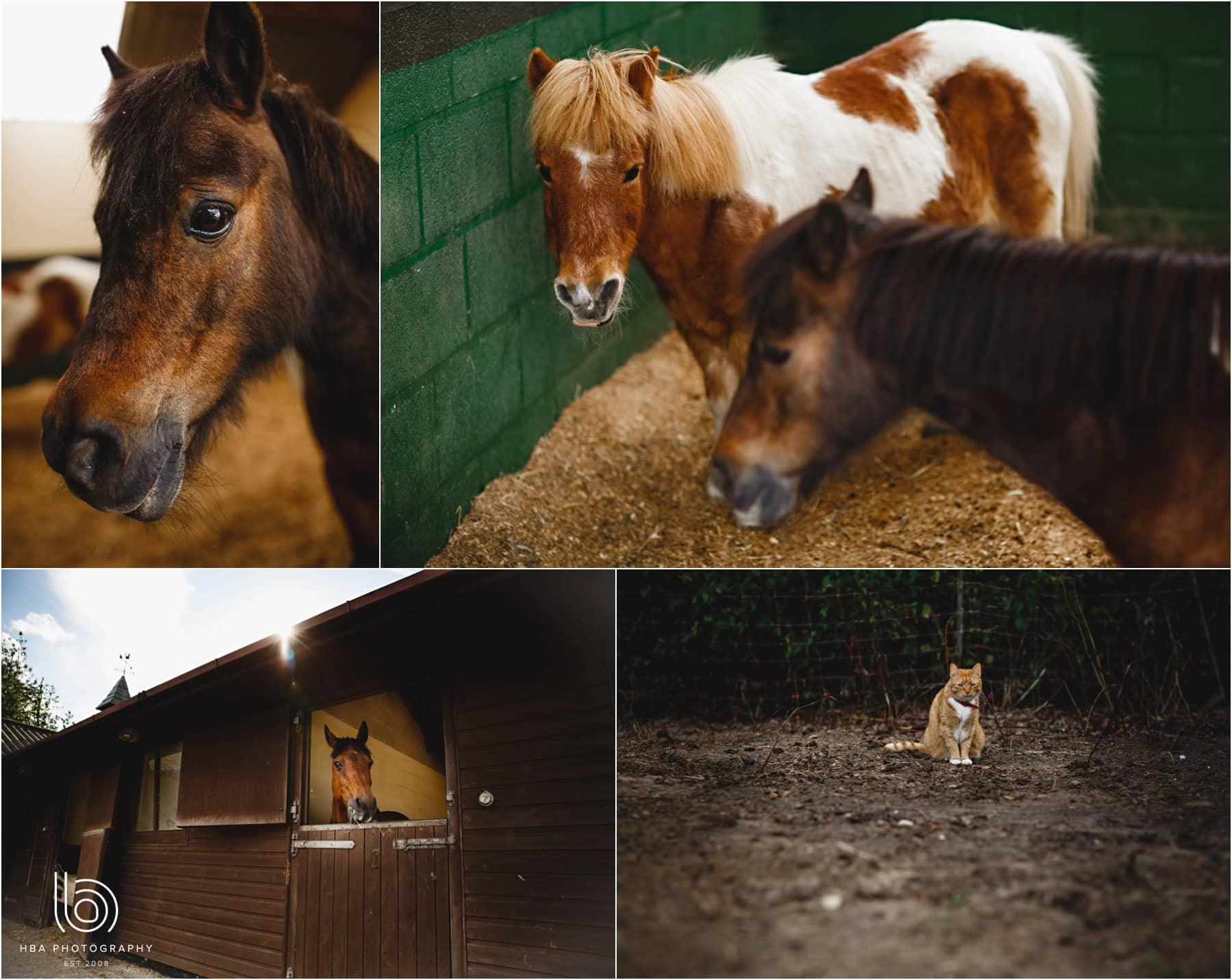 the bride's horses
