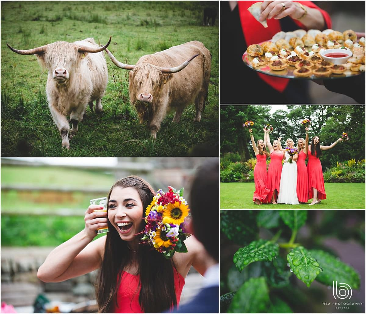 he highland cows and bridesmaids