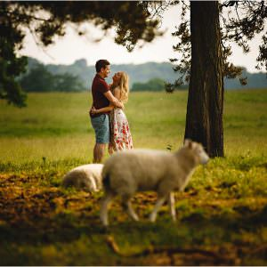 a couple hugging surrounded by sheep at Calke Abbey