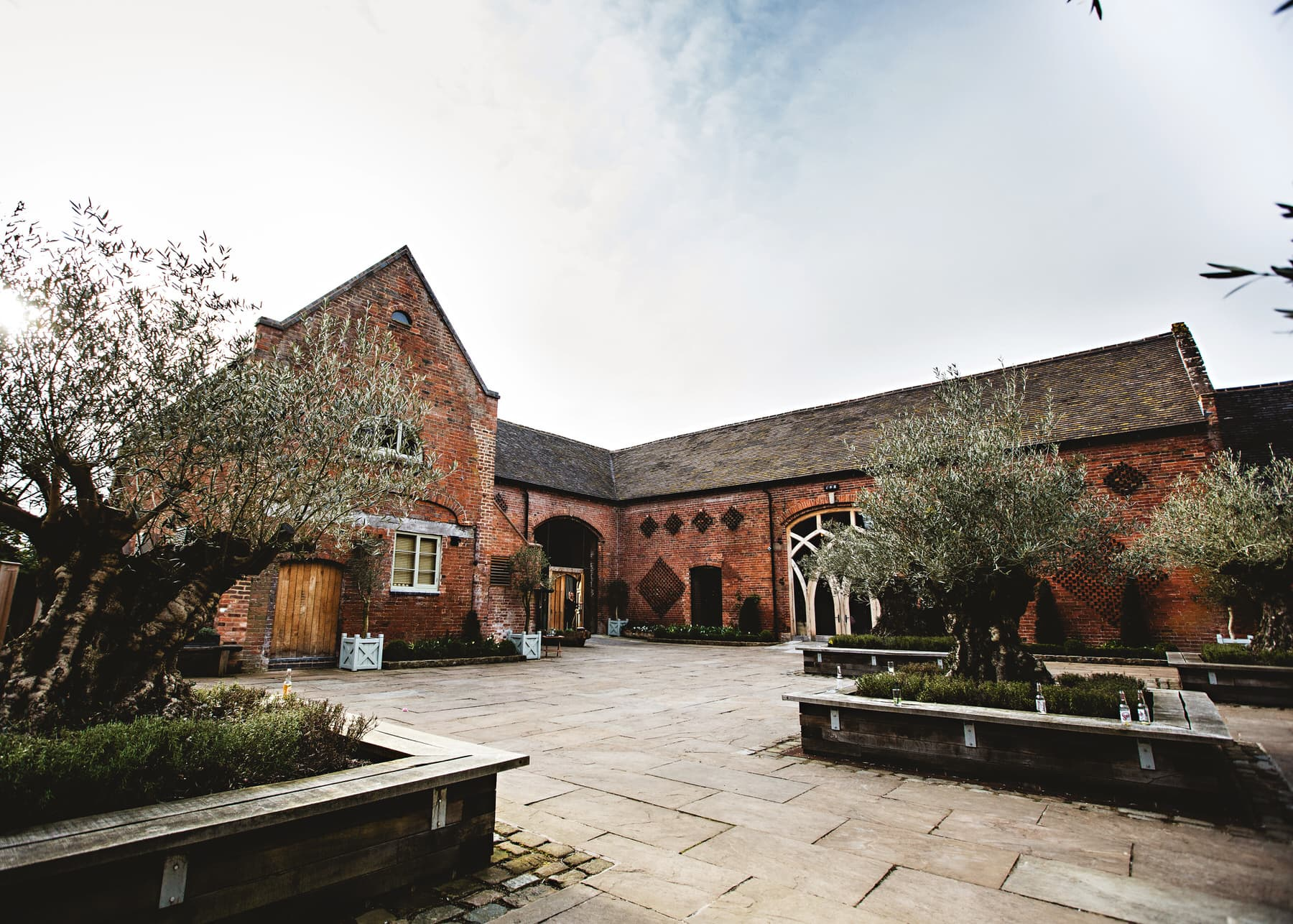 the olive trees in the courtyard