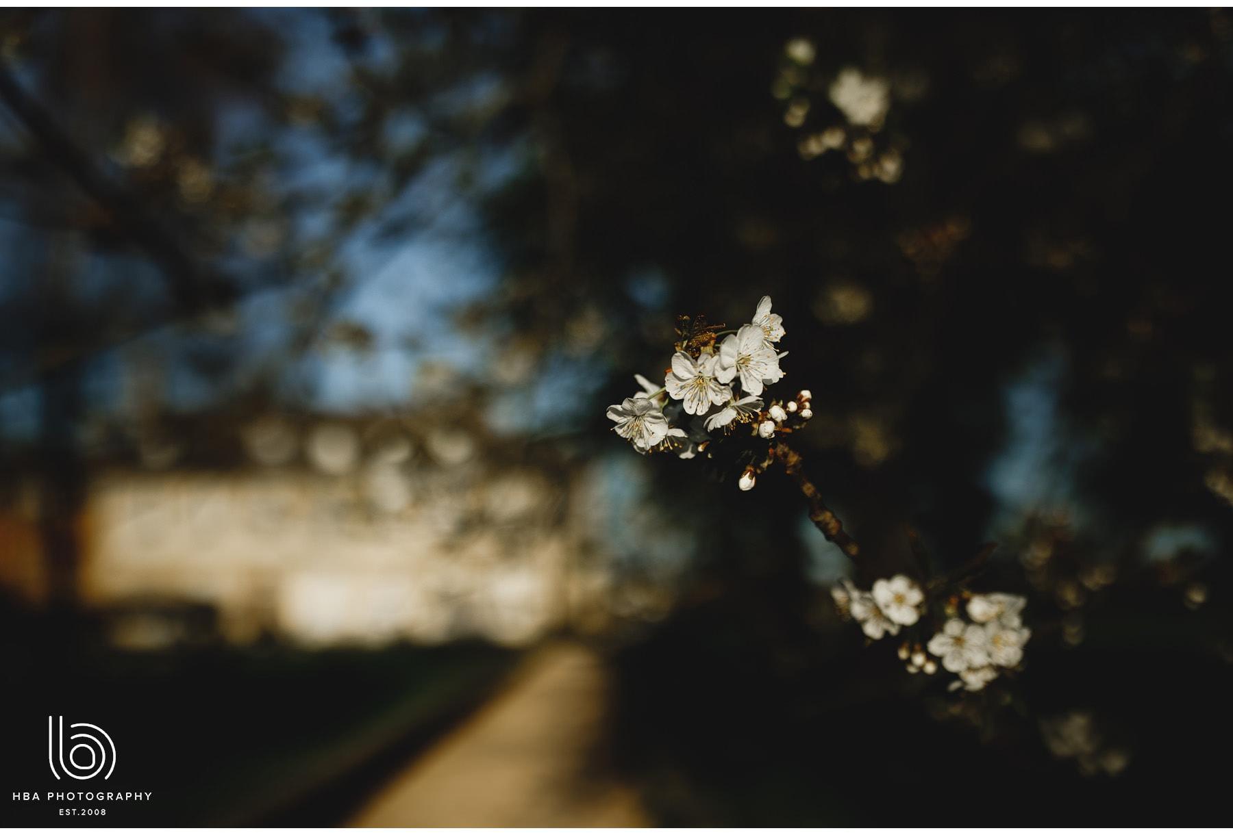 the spring blossom